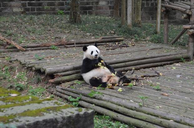oso_comiendo